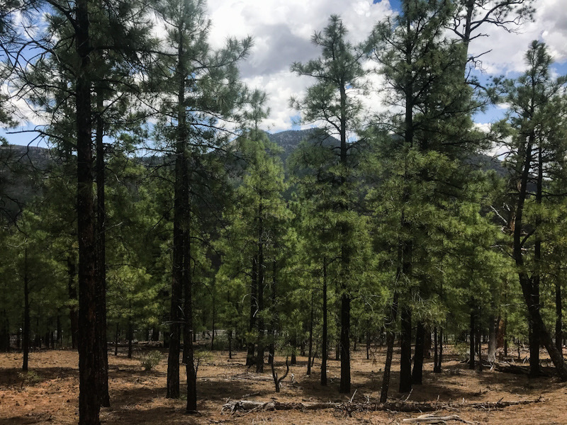 Hiking in Sunset Crater Volcano National Monument